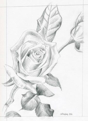 rose flower sketch. flower sketch Really