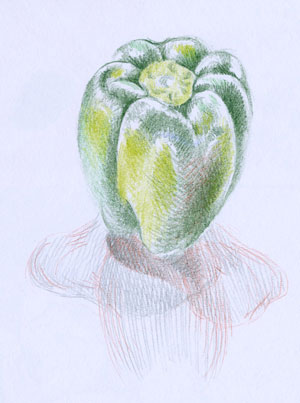 green pepper sketch