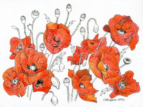 drawing of poppies