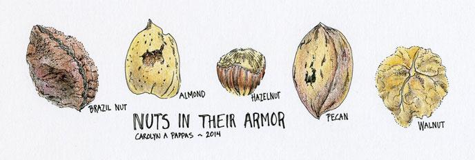 nuts still life